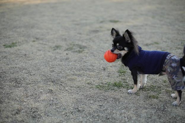 ボール投げて