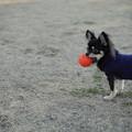 Photos: ボール投げて