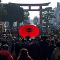 写真: 鎌倉・鶴岡八幡宮