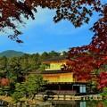 写真: 金閣寺紅葉