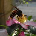 写真: 蜜を求めて(2)