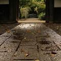 Photos: 雨上がりの道で。。