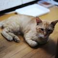 Photos: 2009年7月10日のボクチン(5歳)