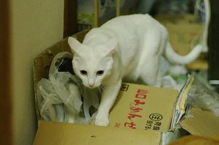 2014年7月18日のシロちゃん(1歳)