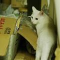 写真: 2014年7月18日のシロちゃん(1歳)