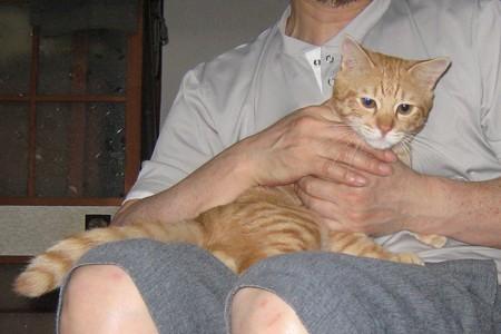 2008年9月17日の茶トラのボクちん(4歳)