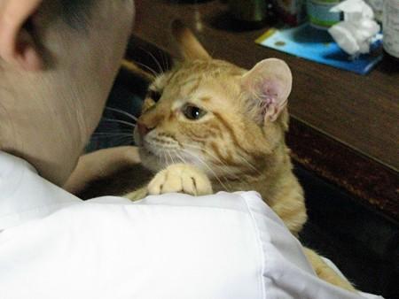 2008年9月30日のボクチン(4歳)