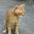 写真: 2010年9月30日のボクチン(6歳)
