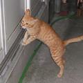 Photos: 2008年10月16日の茶トラのボクちん(4歳)