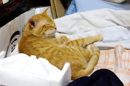 2010年10月20日のボクチン(6歳)