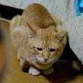 写真: 2009年10月24日のボクチン(5歳)