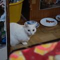 写真: 2016年7月10日のシロちゃん(メス3歳)