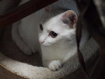 2016年8月13日のシロちゃん(雌3歳)
