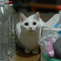 写真: 2016年10月3日のシロちゃん(メス3歳)