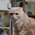 写真: 2016年10月3日のスコちゃん(オス3歳)