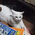 写真: 2016年10月9日のシロちゃん(メス3歳)