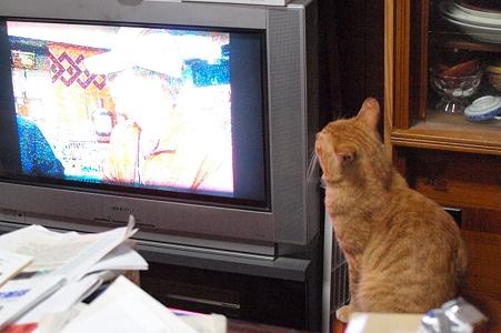 テレビを見るボクチン