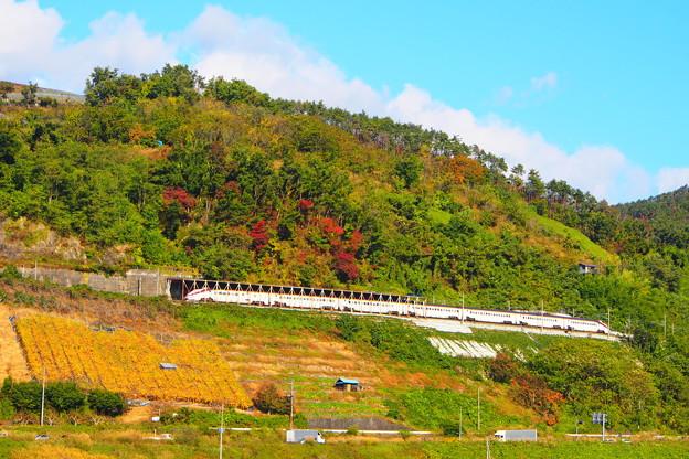 山形新幹線つばさ 新塗色 赤湯~中川