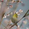 写真: 春への想い^^(70000アクセスのお礼も兼ねまして)