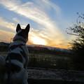 夕日を眺めるマリオ