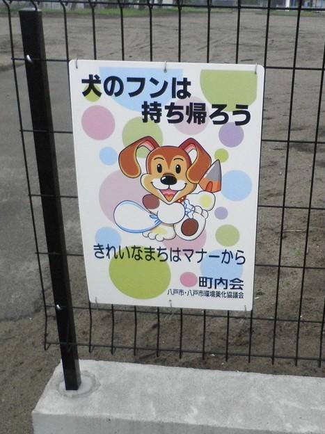 犬糞~八戸市