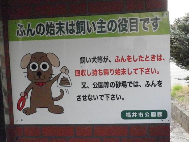 犬糞~福井市