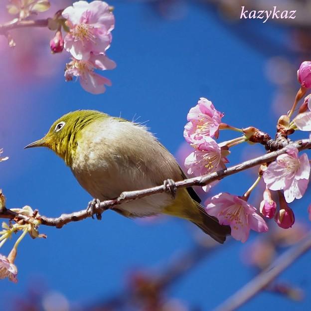 Photos: 口元は花粉色