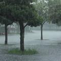 ああ大雨が降り出した