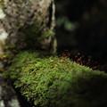 苔 Moss