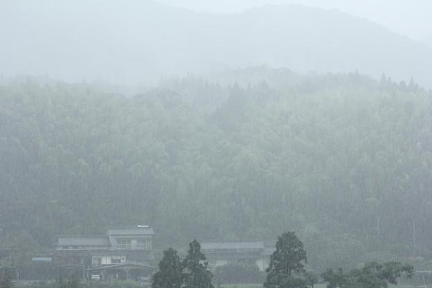 大雨がきた・・雨宿り中
