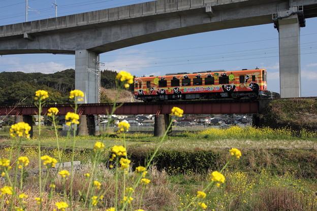菜の花とおれんじ鉄道