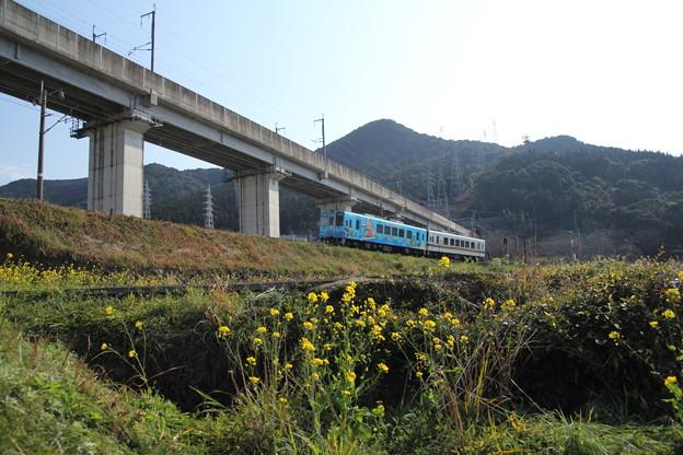 春のおれんじ鉄道