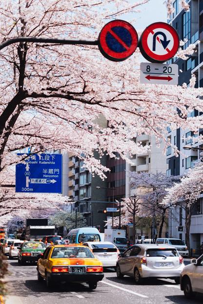 Sakura way