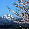 磐梯山桜の季節