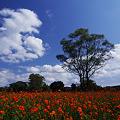 写真: 美麗なお花畑