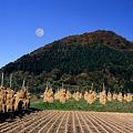 山村に見事な残月