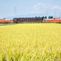 八高線 ハンドル訓練列車