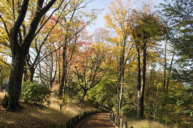 雑木林公園