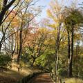 写真: 雑木林公園