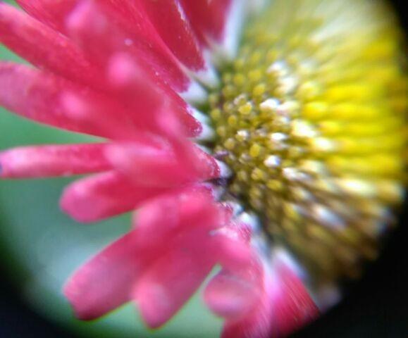 お花キレイ
