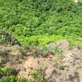 写真: 崖上から覗く