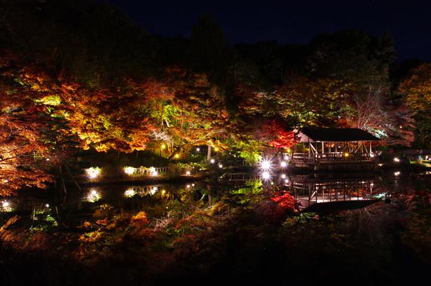 写真: 20161125東山動植物園 (2)
