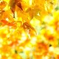 Photos: にぎやかな秋色