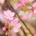 写真: 可愛いピンク色