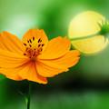 Photos: 路傍に咲いた秋の花