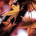 写真: 冬になって秋の彩り