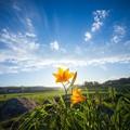 おはようございます。今日の青森に咲く花フォト…