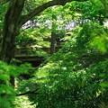 東福寺・方丈庭園33