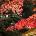 Photos: 神蔵寺21