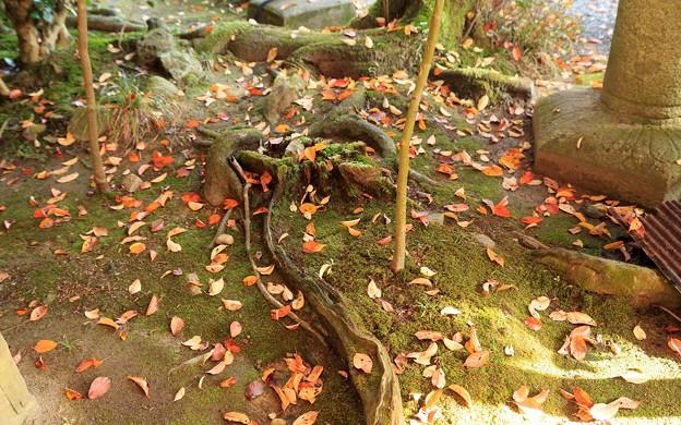 Photos: 鍬山神社74